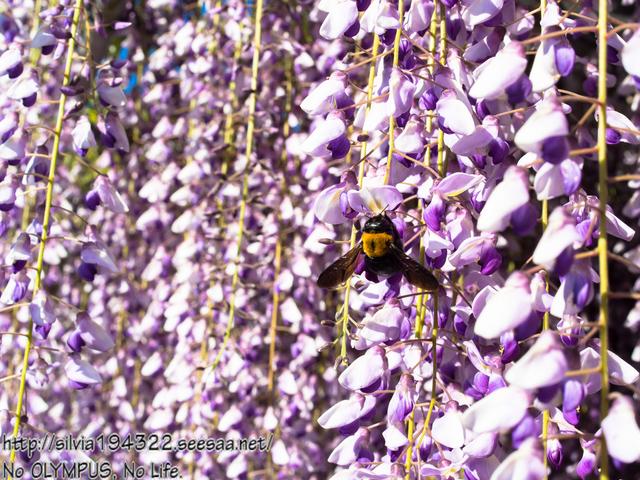 150504_161300_P5040246_Original_E-M5_LR5_blog.jpg